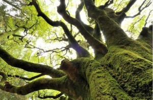 forêt de paimpont